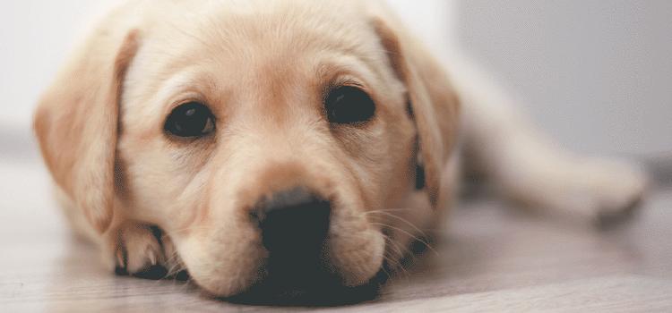 Emergencies and Urgent Pet Care